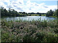 TF0505 : Reeds on the lakeside at Burghley House by Richard Humphrey
