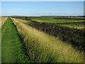 TF8245 : Norfolk Coast Path : Week 36