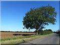 TL5471 : Upware Road south of Field Farm by Richard Humphrey