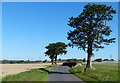 SP1693 : Trees along Wishaw Lane near Minworth by Mat Fascione
