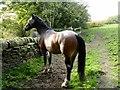SD7412 : Horse in a field by Philip Platt