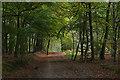SU8357 : Beech avenue, Hawley Common by Alan Hunt