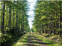 NH6661 : A straight forestry road across the Millbuie Forest by Julian Paren
