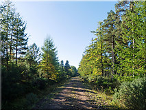 NH6660 : Minor forestry road across the Millbuie Forest by Julian Paren