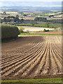 NT9459 : Field below Tam's Wood : Week 41