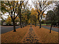 TA1130 : Autumnal Elm Avenue : Week 43