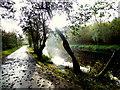 H4772 : Autumn shadows, Mullaghmore by Kenneth  Allen