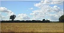 SP9563 : Farmland, Wymington by N Chadwick