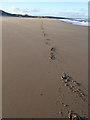 NZ4936 : Tracks on North Sands : Week 46
