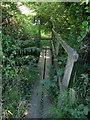 SY3394 : Footbridge on county boundary by Derek Harper