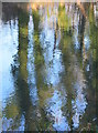 SU5766 : River Kennet: Reflections near Woolhampton, Berkshire : Week 1