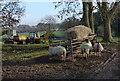 SP4998 : Sheep at Normanton Turville : Week 3
