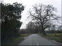 SJ5365 : Willington Lane near Jone's Wood by Colin Pyle