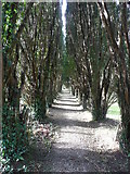 SW7340 : The avenue of yews, Gwennap churchyard by Humphrey Bolton