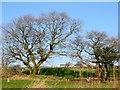 SD7511 : Off Roading Brook Road, Harwood by Philip Platt