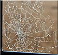J4079 : Spider's web, Seapark, Holywood (January 2016) : Week 3
