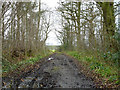 TL8027 : Bridleway, Moat Wood by Robin Webster