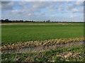 TL3976 : North Middlemoor by Hugh Venables