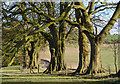 SU4856 : Beeches, Sydmonton, Hampshire by Oswald Bertram