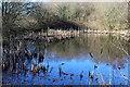 ST1999 : Pond (2), Valentec Nature Reserve by M J Roscoe