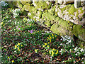 NH6853 : Signs of spring beside the road to Bay Farm : Week 8