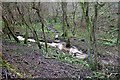 ST7661 : Horsecombe Brook by Derek Harper