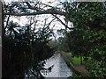 SU7876 : The River Loddon by Tim Glover