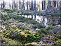 NH5753 : Small lochan in Monadh Mor bog forest by Julian Paren