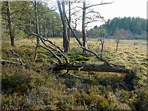 NH5753 : Area of bog within the Monadh Mor Bog Forest by Julian Paren