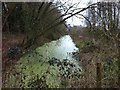 TQ0143 : Wey & Arun canal at Birtley Green by Hugh Craddock