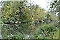 TL4964 : River Cam by N Chadwick