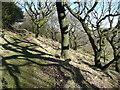 SE0321 : Footpath through Lumb Rough, Sowerby by Humphrey Bolton