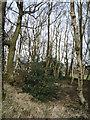 SK3097 : Woodland, Hannah Moor by JThomas