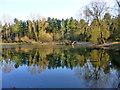 TL1540 : Woodland Pond by Robin Webster