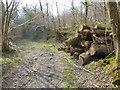 TQ1928 : Log pile by bridleway by Shazz