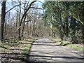 TL0133 : Minor road beside Priestley Plantation by JThomas