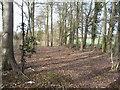 TL1330 : Tingley Field Plantation by JThomas