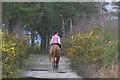 SU9052 : Horse rider, Ash Ranges by Alan Hunt