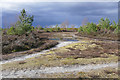 SU9052 : Firebreak, Ash Ranges by Alan Hunt