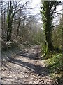SY6396 : Footpath up Magiston Hill by Becky Williamson