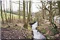 SJ8854 : Stream south of Brindley Ford by Richard Dorrell