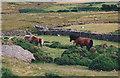 SH6367 : Ponies in the Frydlas Valley above Gerlan by Eric Jones