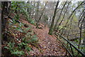 SX4551 : South West Coast Path, Mount Edgcumbe Park by N Chadwick