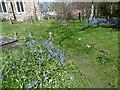 TQ5078 : Bluebells in St John the Baptist Churchyard, Erith by Marathon