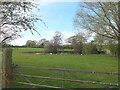 SJ5974 : Pond near Rose Farm, Acton Bridge by Gary Rogers