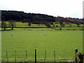 SJ1343 : Pasture in the Dee Valley by John Lucas