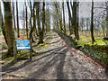SE0218 : Path in Ryburn Woods by David Dixon