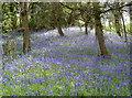 ST6763 : Stantonbury in Spring by Neil Owen