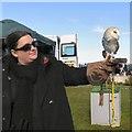 SH7882 : An Owl in Llandudno by Gerald England