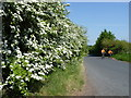 SO8961 : Early blossom on Pulley Lane, Droitwich by Jeff Gogarty